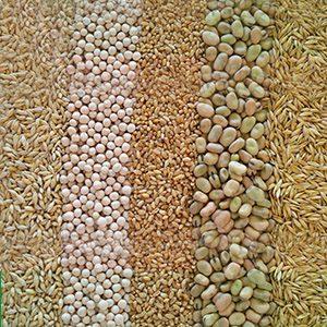 semillas-icon